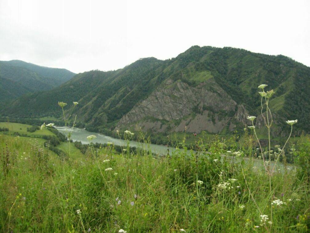 Продается земельный участок ДНТ 4,99 ГА с. Толгоек