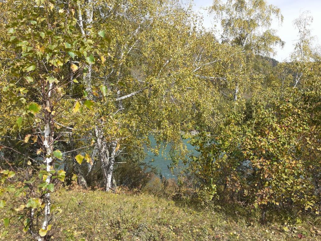 Участок 0.7 Га на берегу реки Катунь